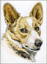 Nelson,Welsh Corgi by Jack Knight